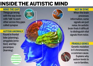 Autism brain differs in it's neurotransmission _( image- cdn)